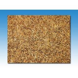 Semilla de prado granel