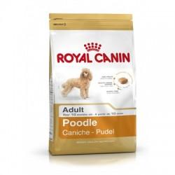 ROYAL CANIN CANICHE ADULT
